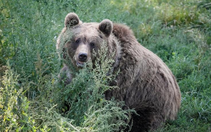 grizzlysomonulsisocul